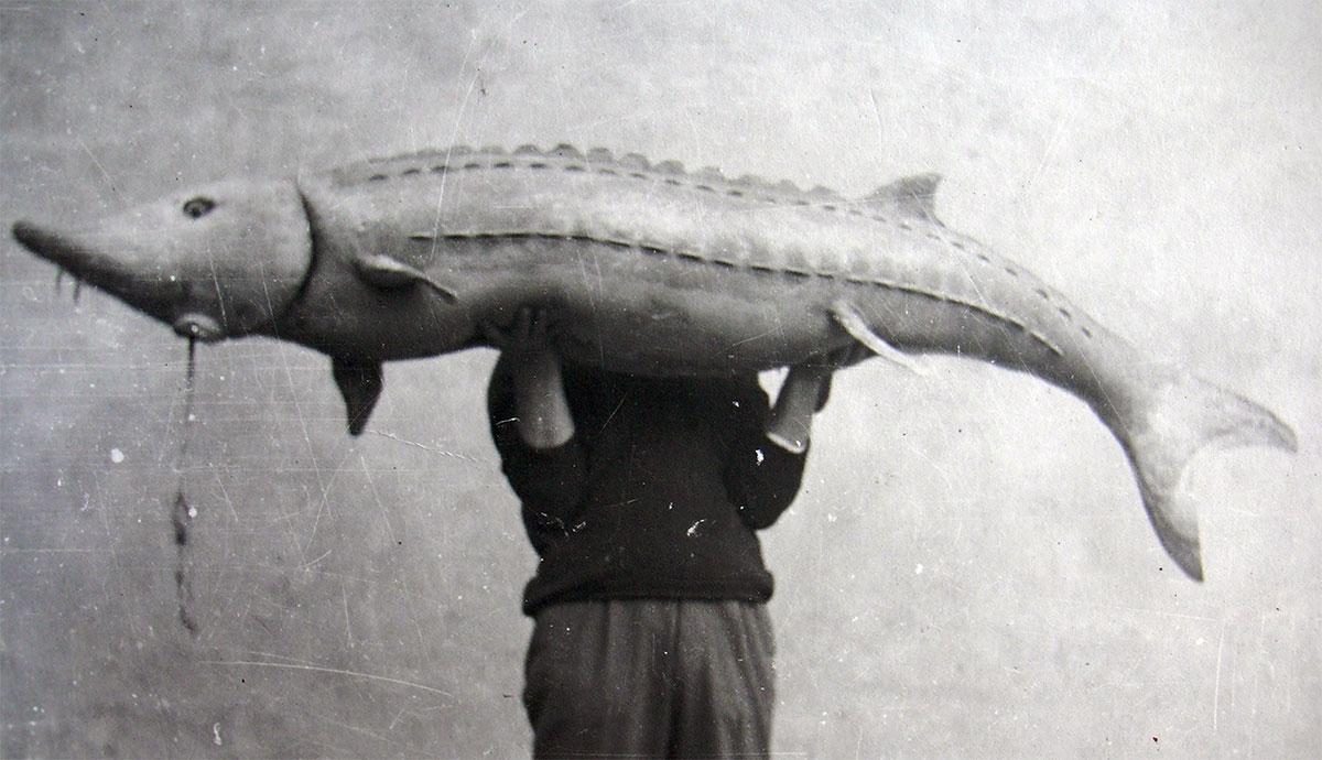 12_storione-finto-per-il-documentario-Pescatori-di-storioni