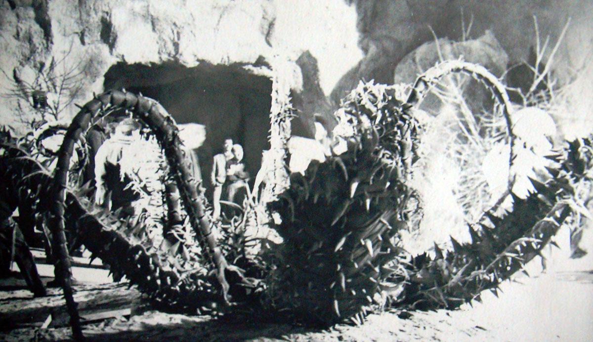 4_Marte-dio-della-guerra-1962-realizzazione-di-pianta-carnivora-gigante