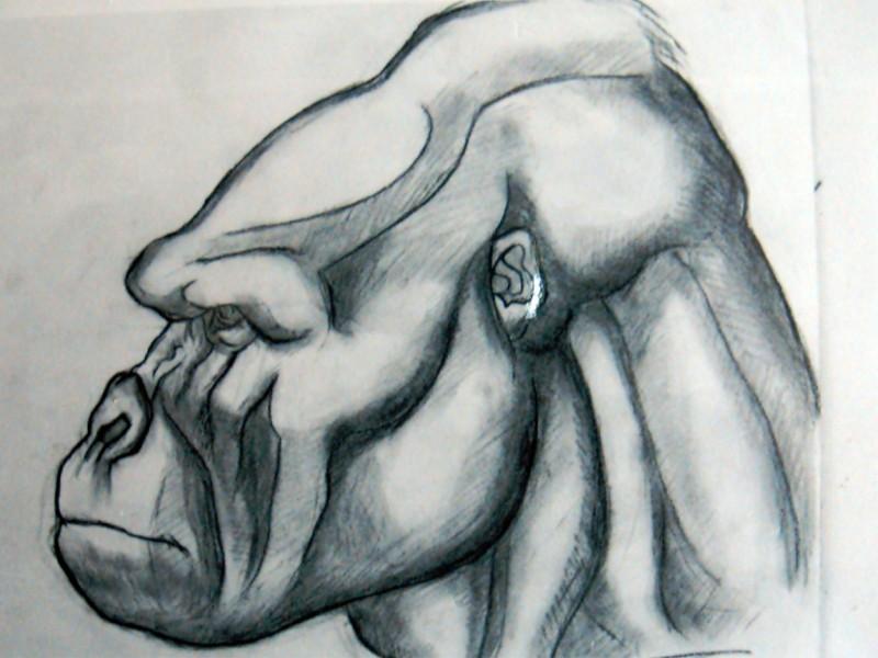 Disegno del prototipo della testa di Kong