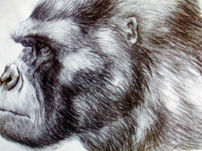 Render a matita del muso di Kong